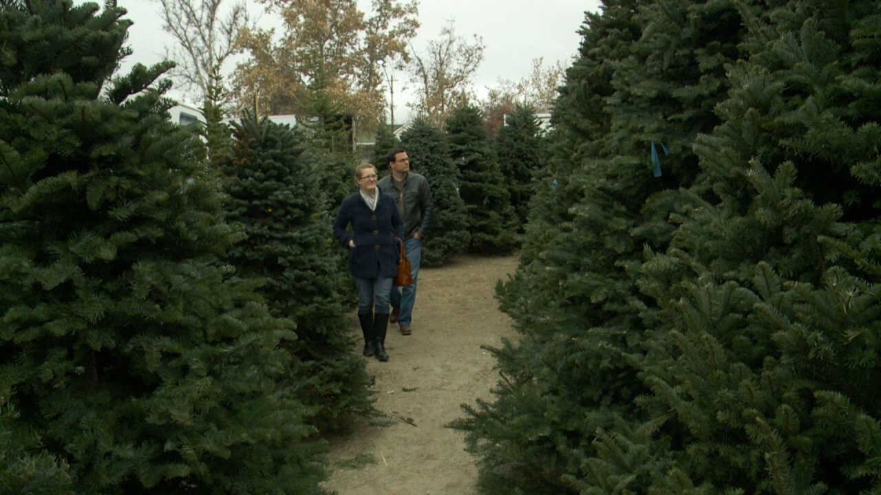 Utah services offering free Christmas tree curbside pick up after holidays