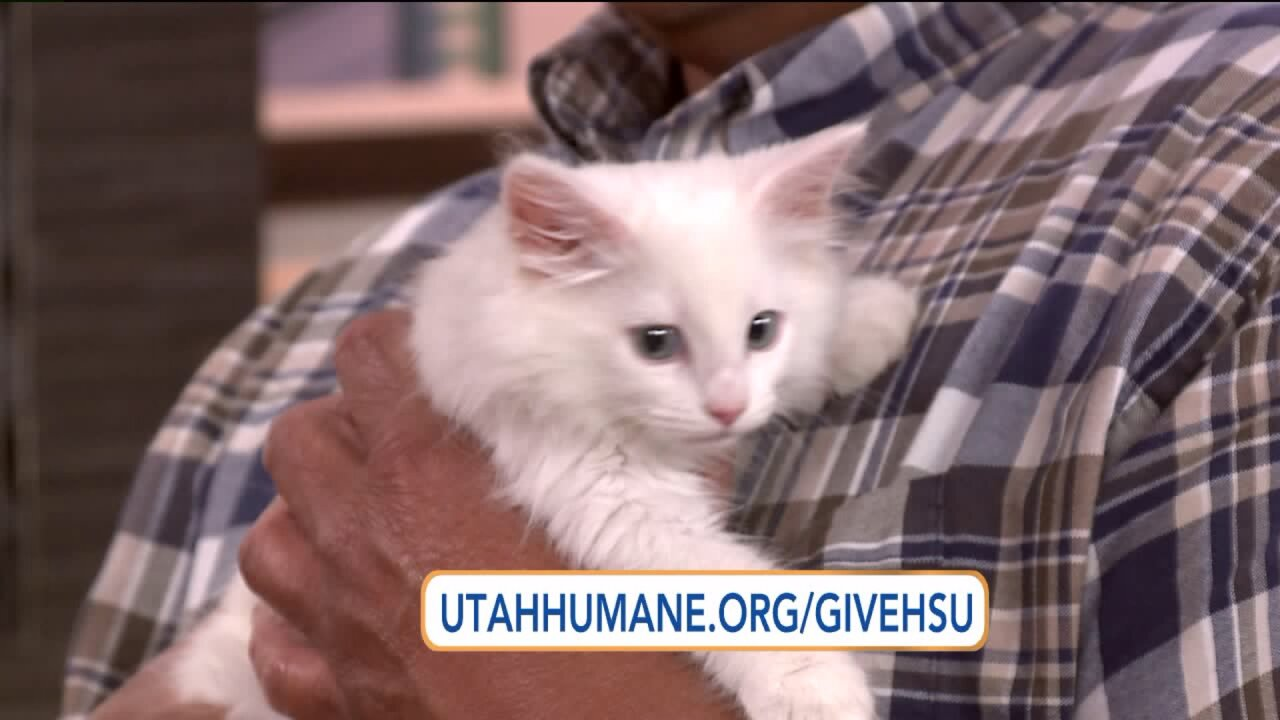 Utah Humane Society's Day of Giving