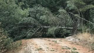 Bigfork Tree Damage