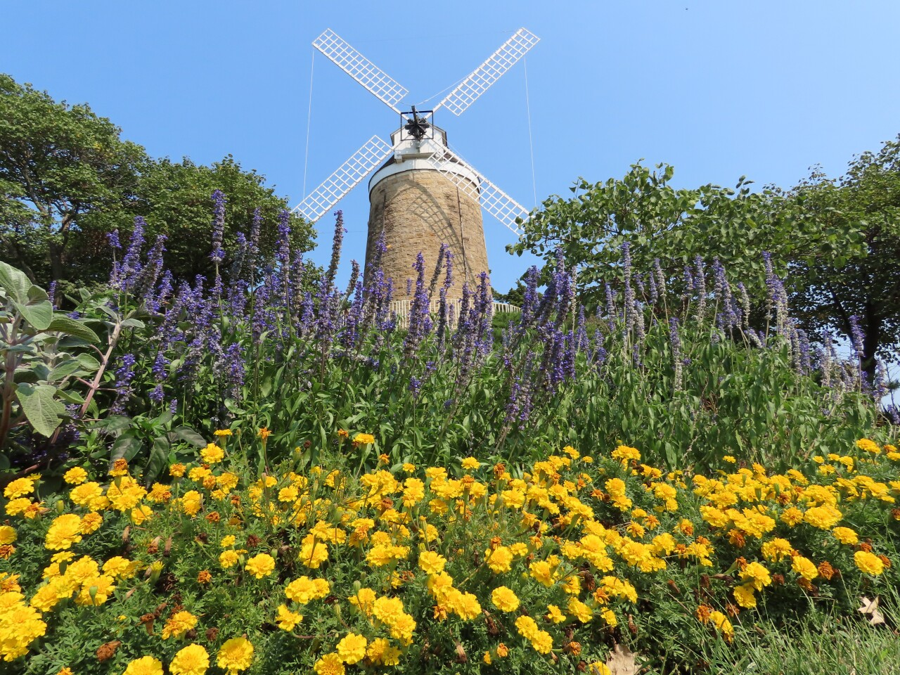 Dutch windmill at the city park.JPG