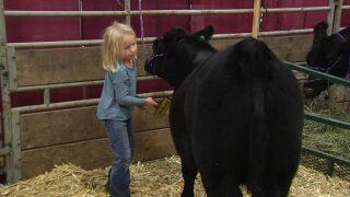 Montana Ag Network: 2020 Nile Merit Heifer application available