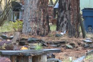 Court documents: Hot Springs homicide result of fight among roommates