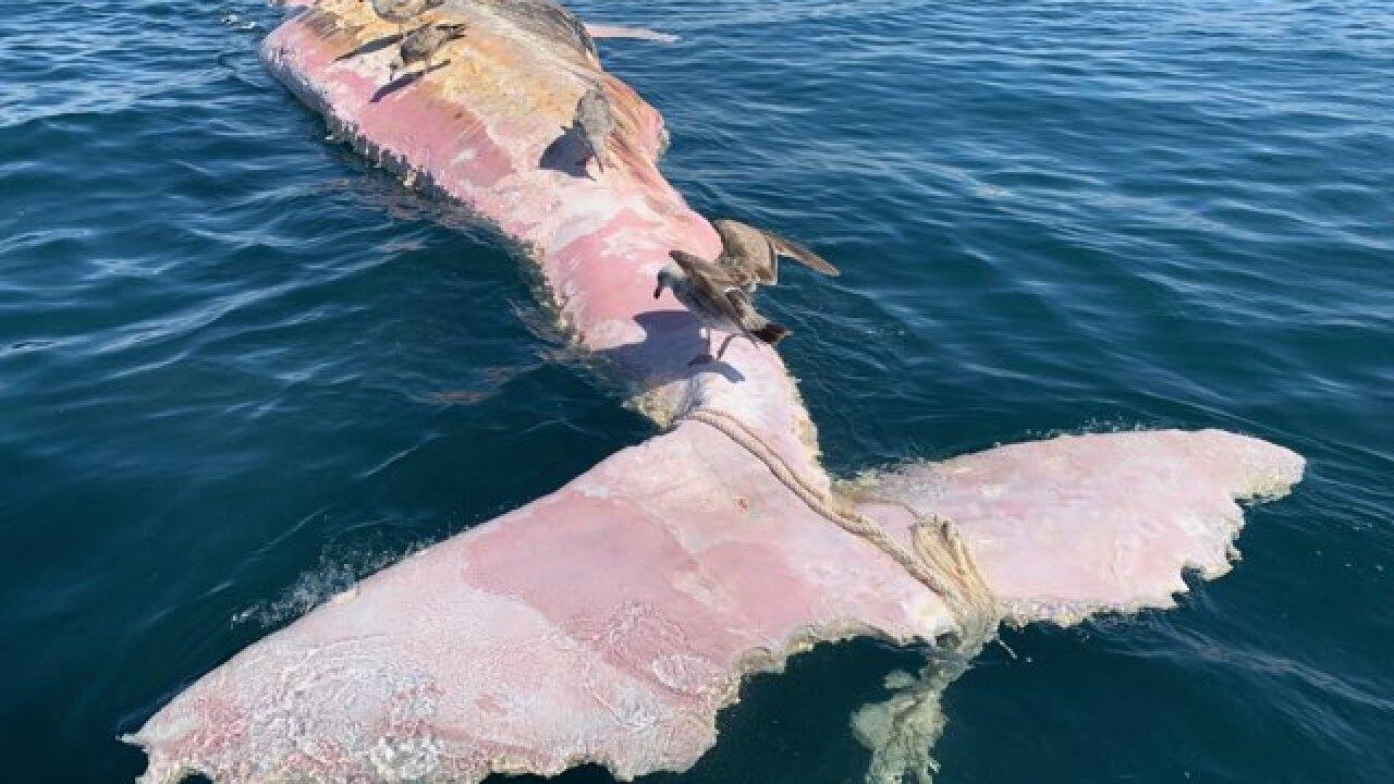 dead whale balcks beach_3.jpg