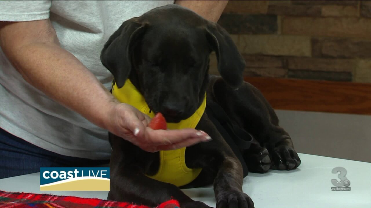 Surprising summer dangers for pets and a pup who needs a home on CoastLive