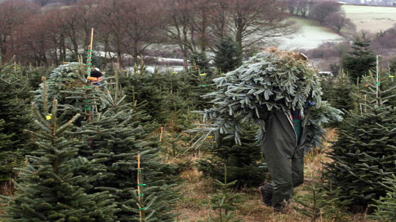 Recycle your Christmas tree at more than 30 Southern Nevada locations