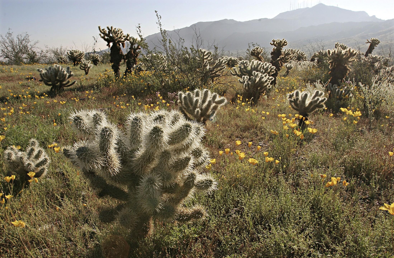 Desert i Phoenix, AZ