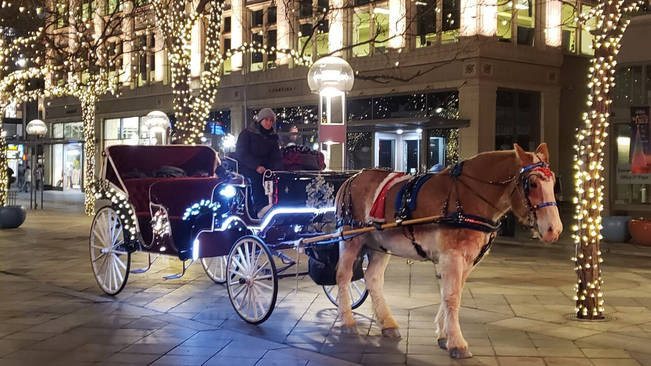 Horse-drawn carriage in Denver