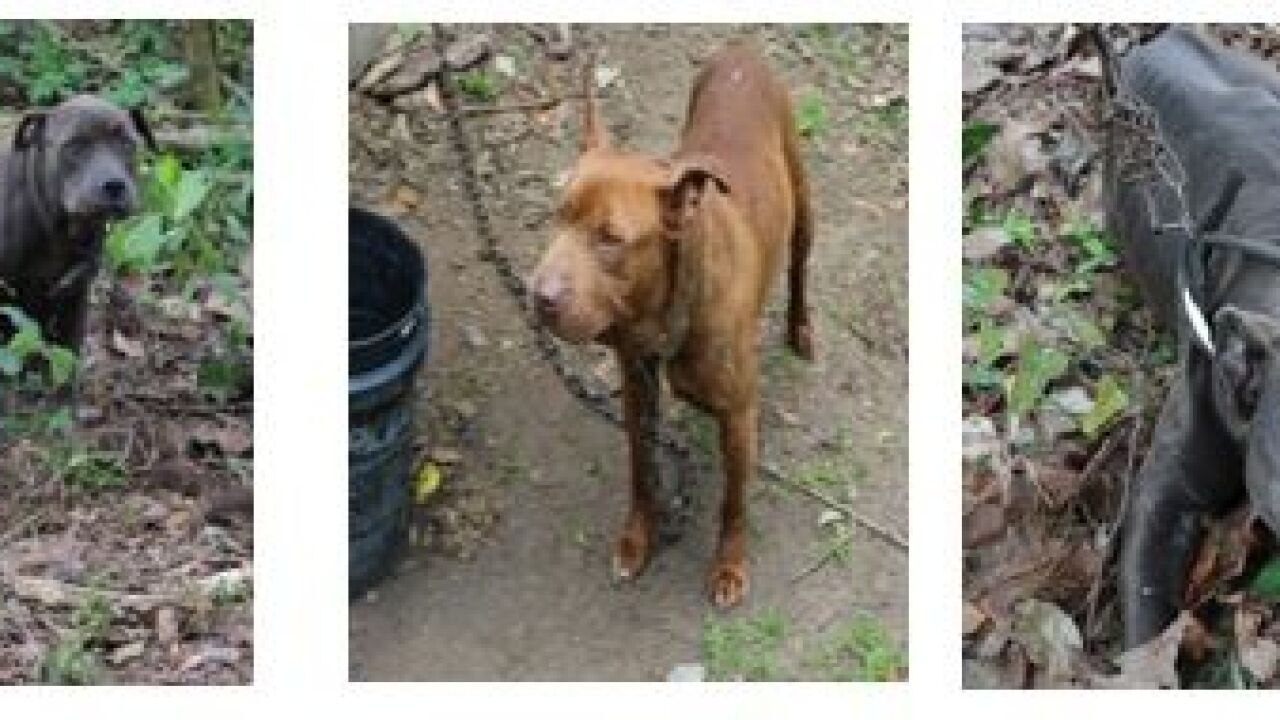 2 Arrested in Decatur County Dog Fighting Operation