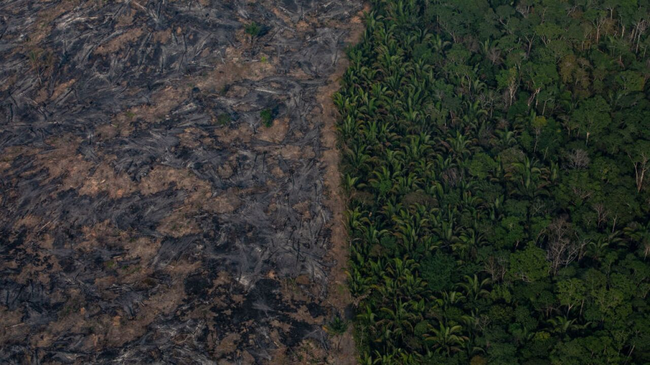 What the Amazon's fires mean for its animals