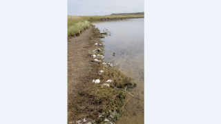 Thousands of birds found dead near Molt from hail storm