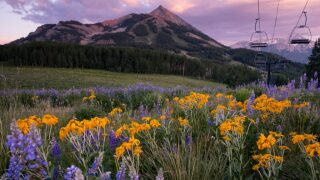 Everything you need to know about Crested Butte's Wildflower Festival