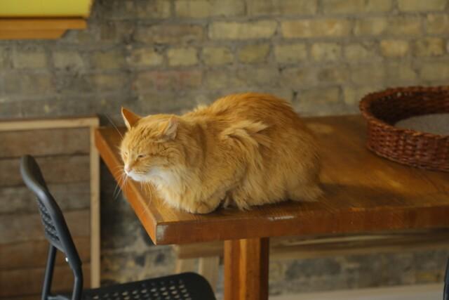 Milwaukee's first cat cafe opens its doors [PHOTOS]