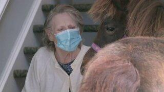 Horses visit CH nursing home (May 7).jpeg