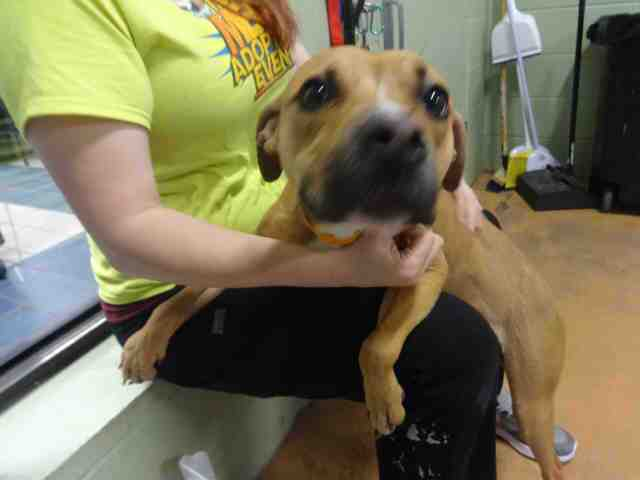 Free pet adoptions through Christmas Eve at Indianapolis Animal Care Services