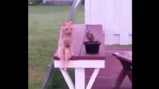 This Video Of A Cat Sitting Like A Human Will Make Your Day