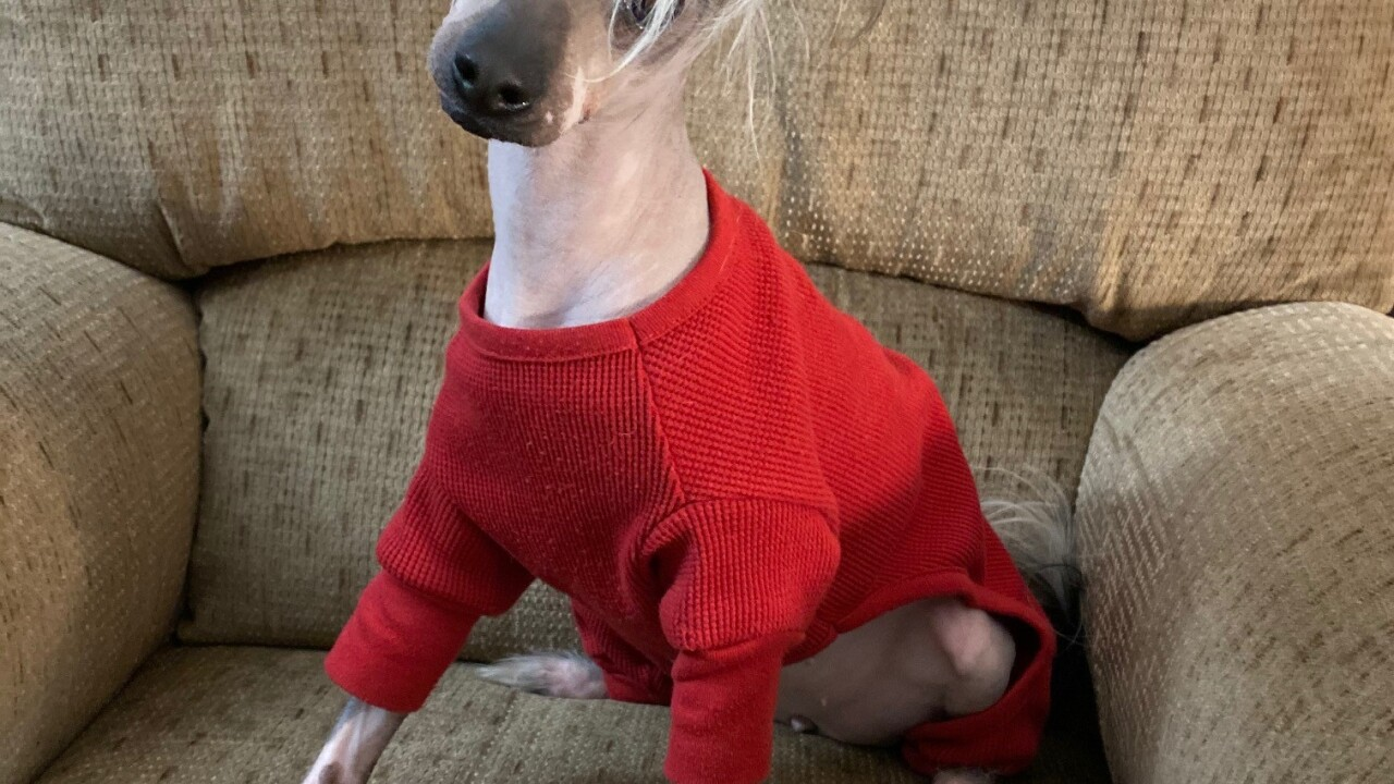Scarlett No Haira in red sweater.jpg