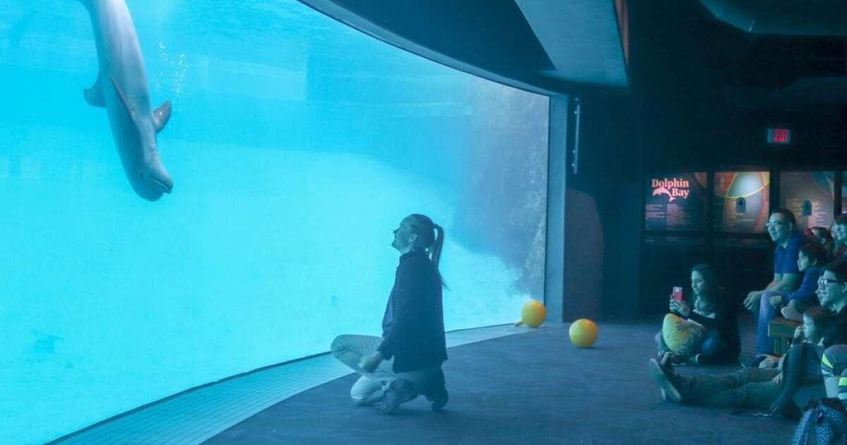 $2 admission on aquarium's Community Day on Monday