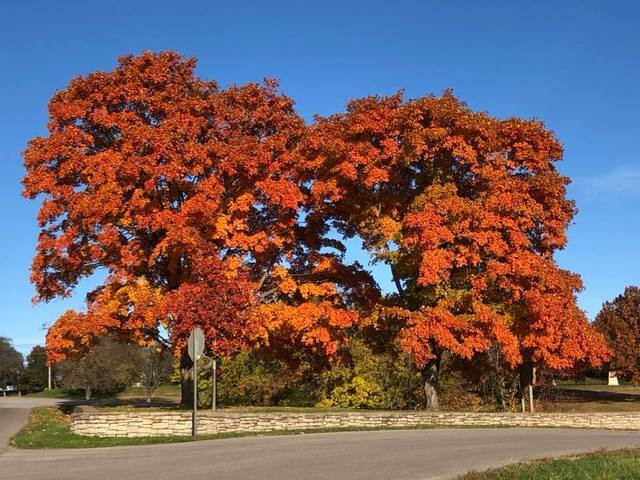 PHOTO GALLERY: See the vibrant fall colors around Kansas City