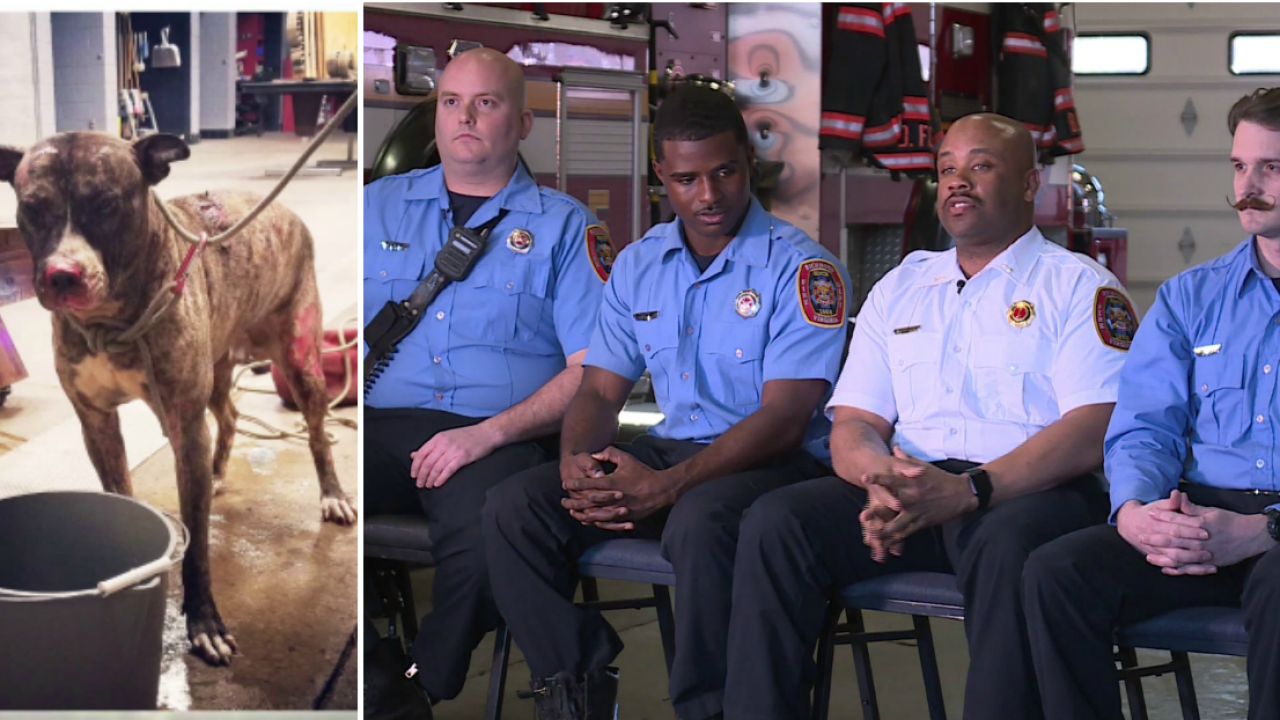 Meet the Richmond firefighters who rescued dog intentionally set onfire