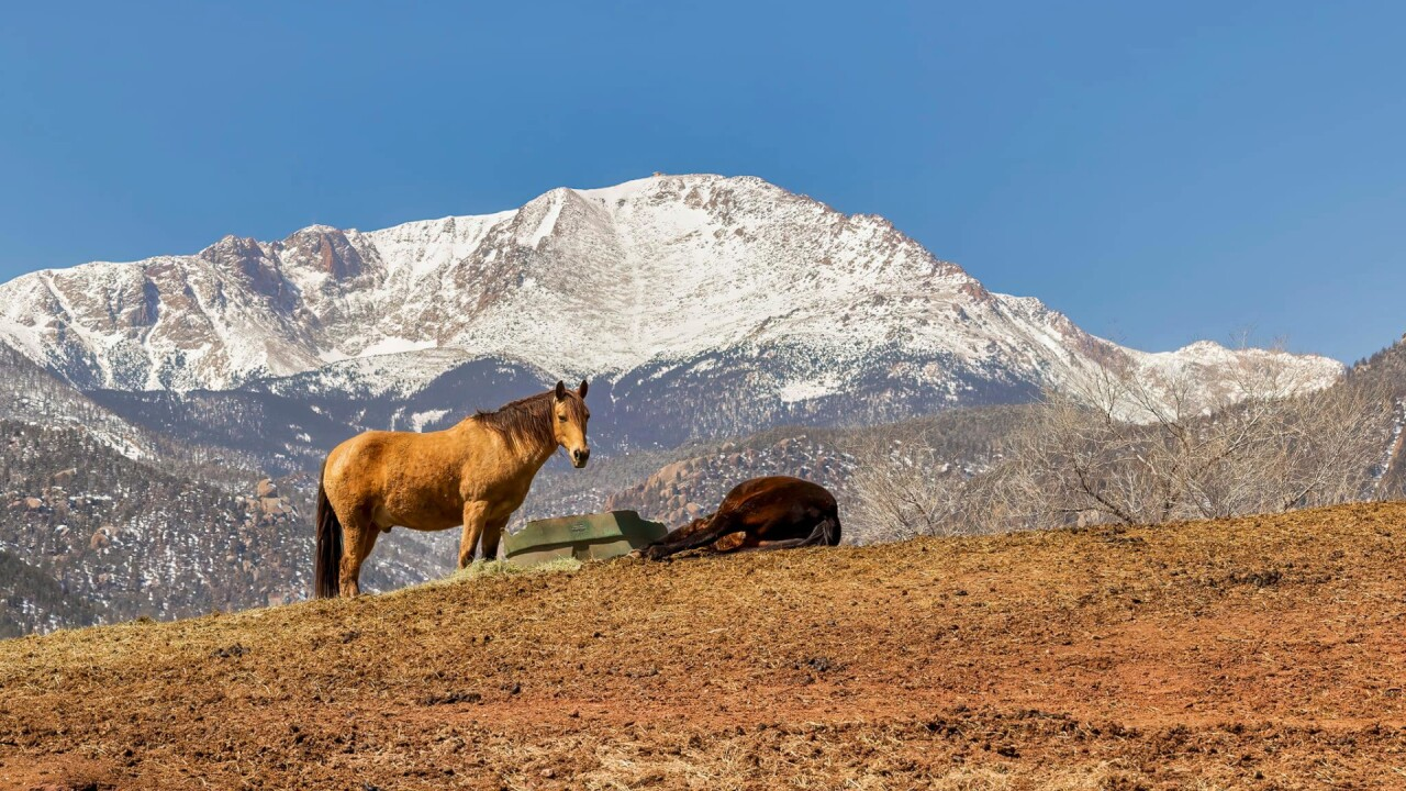 Horses in front of Pikes Peak