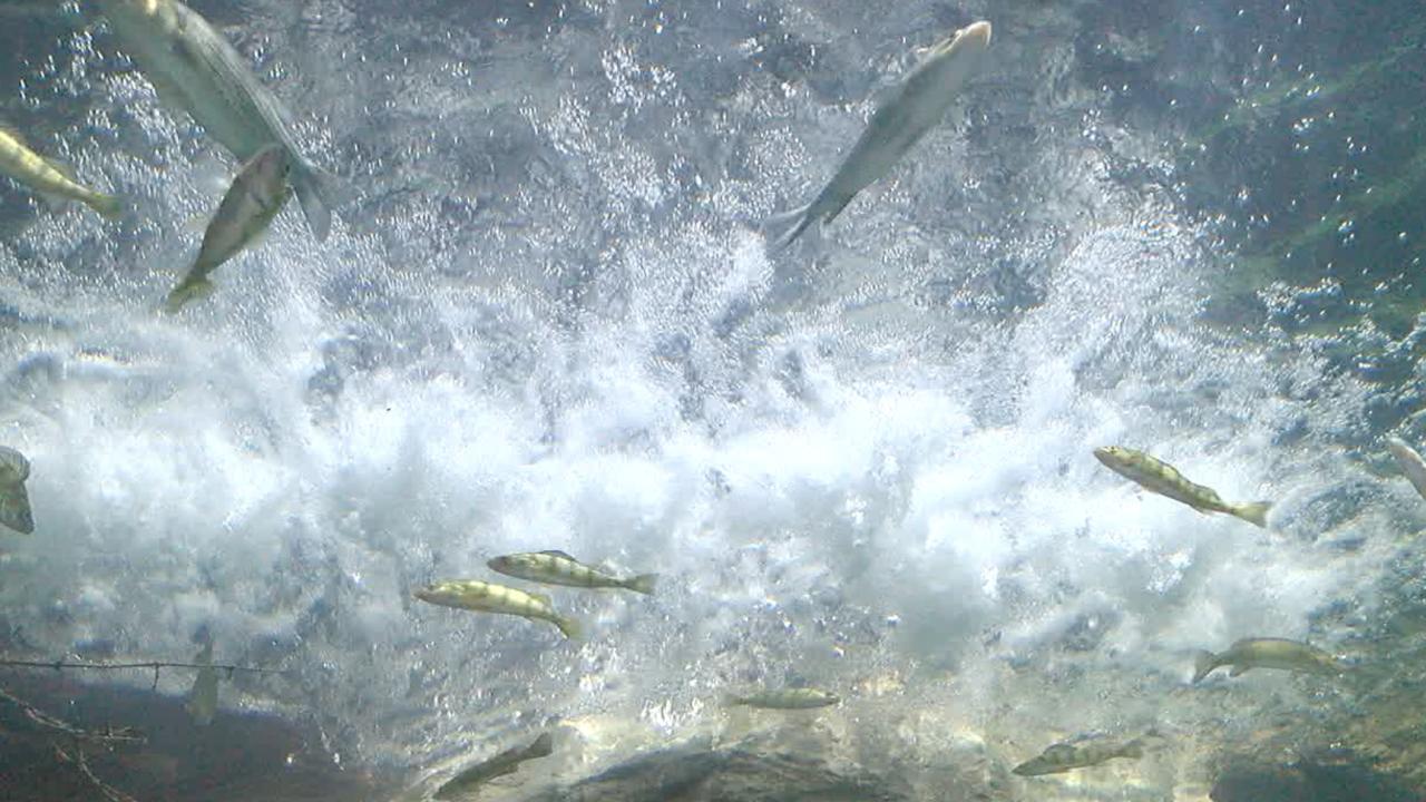 Freshwater Falls exhibit