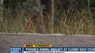possible animal neglect at closed golf course
