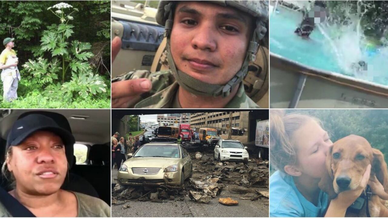 Tall weed, stolen military vehicle, and the crash that closed I-95 top 2018 most-read list