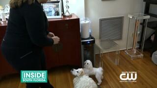 Paws & Claws: Miami PetConcierge