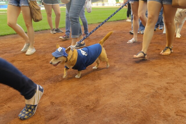 GALLERY: The ROOF is open and the pups are out at Bark at the Park