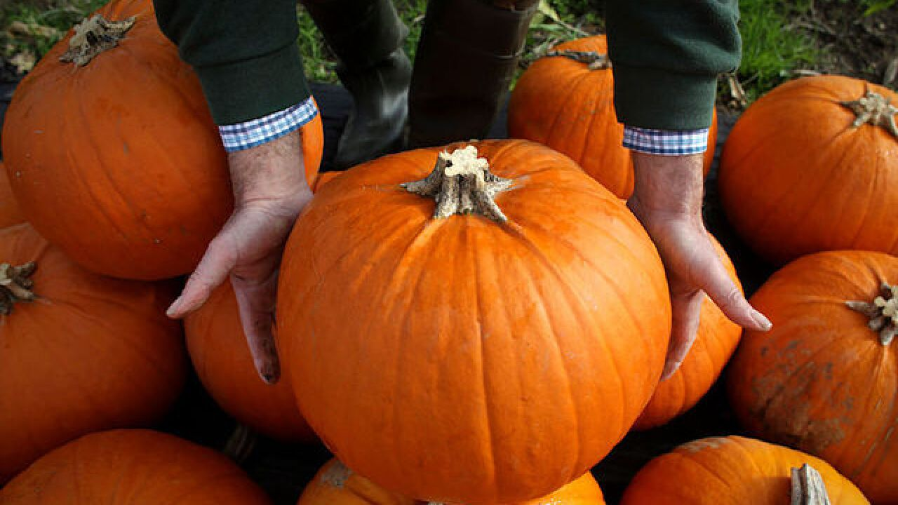 Who has the biggest pumpkin in the state? Drive to Old Colorado City on Saturday and find out