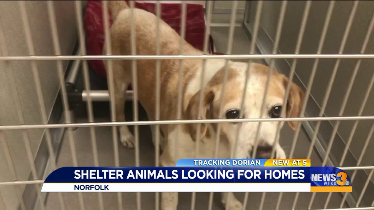 Pets look for new homes in Hampton Roads after hurricane evacuations in South Carolina