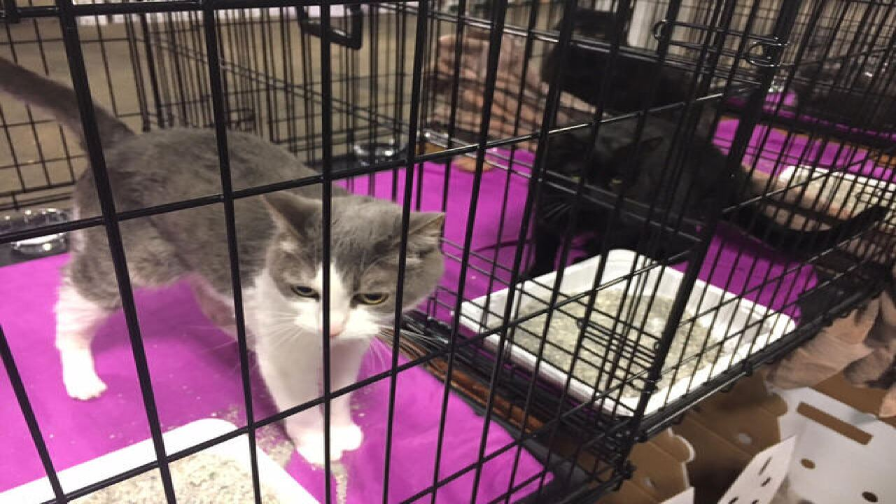 PHOTOS: IndyMega Adoption Event