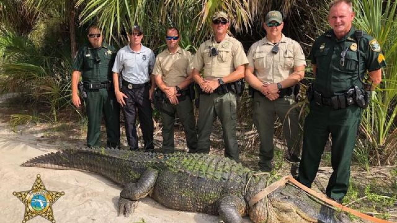 13-foot alligator captured in Florida park where dogs were attacked