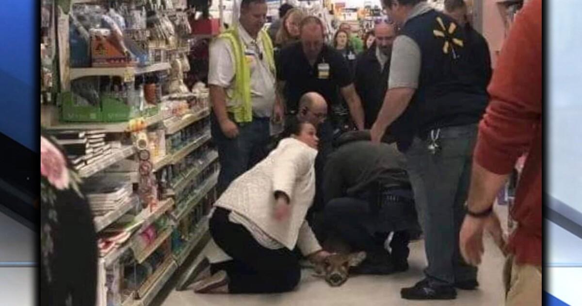 Wooster Walmart customers help employees catch deer on the ...