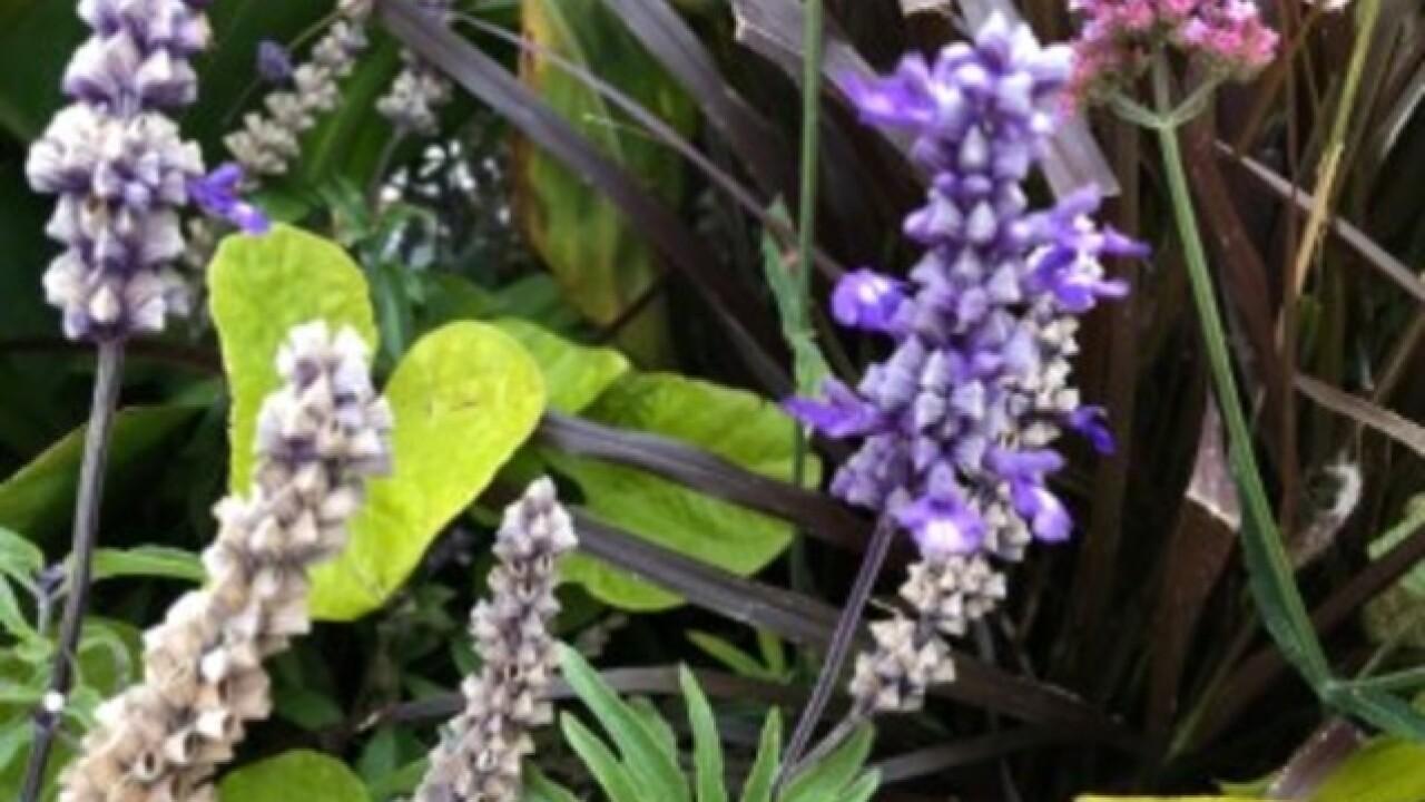 Master Gardener: Bring house plants in now