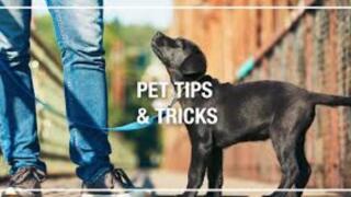 "Menards Home Improvement Topic: ""Pet Proofing Tip"""