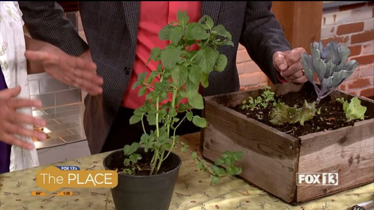 What you need to know if you still want to plant agarden
