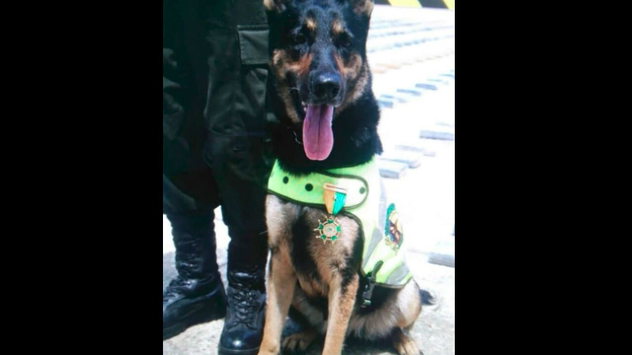 A Colombian gang has put a $70,000 bounty on Sombra the drug-sniffing dog