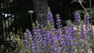 Betty Ford Alpine Garden