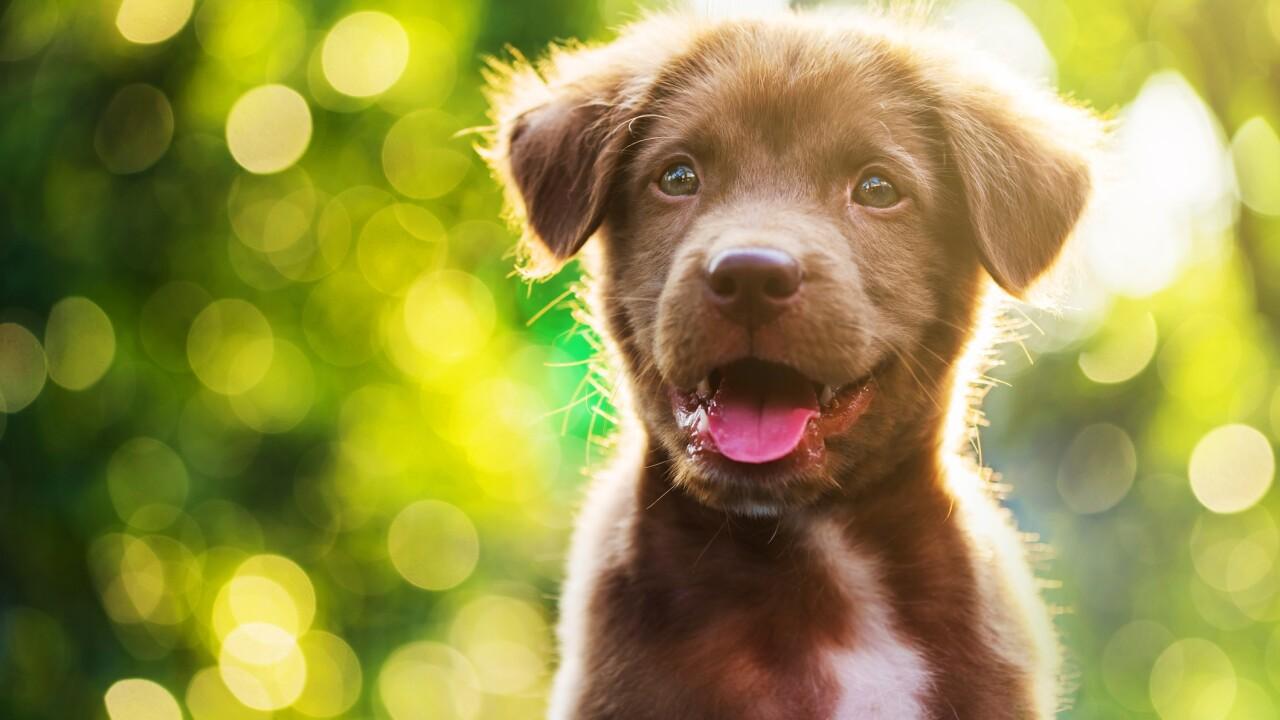 Support dog adoption through Saturday's National PuppyDay