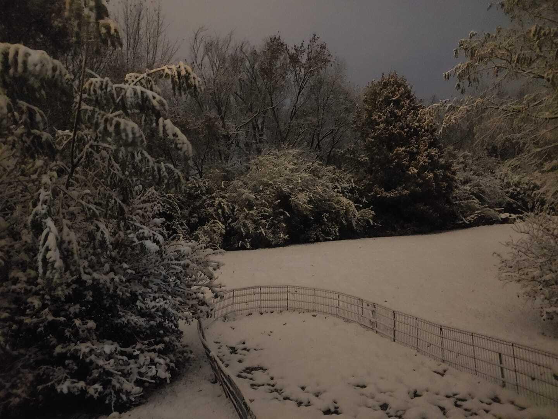 lex snow