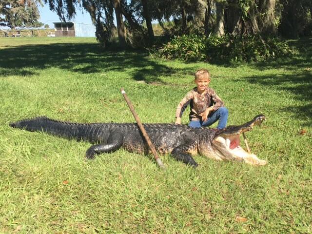 Alligators in Florida: The craziest gator photos & stories of 2017