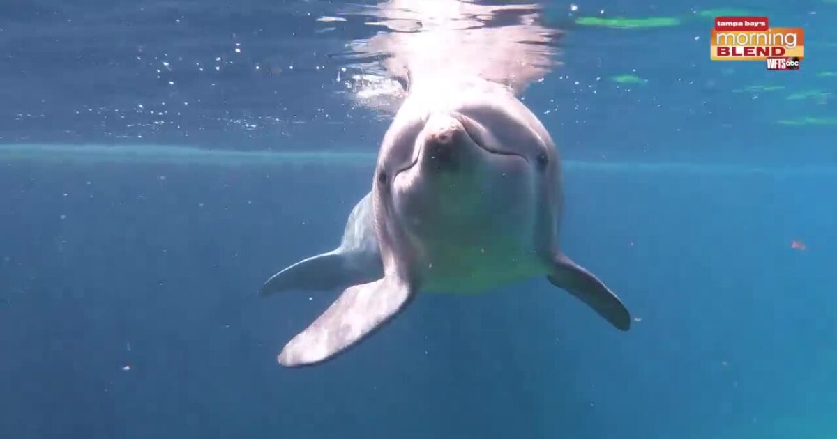 Clearwater Marine Aquarium welcomes Hemingway!