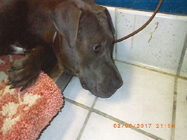 PHOTOS: Woman allowed to have pets despite 11 care, treatment violations