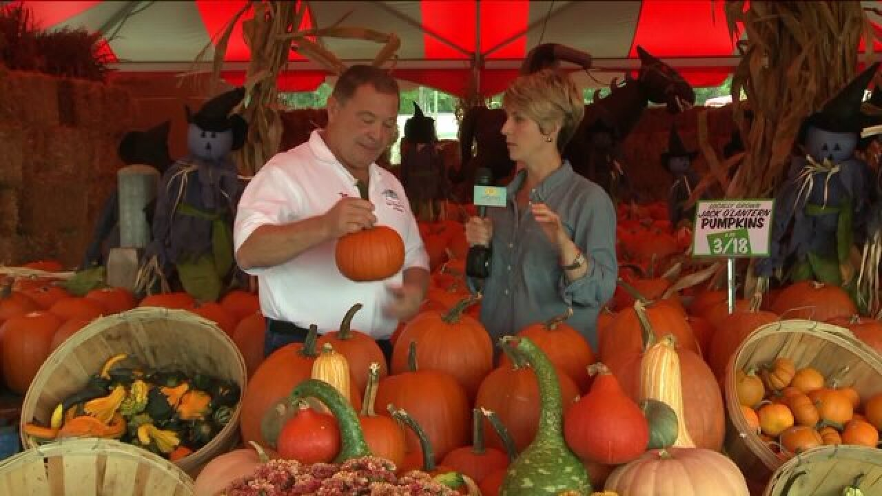 Find the best pumpkins in the patch at Tom Leonard's