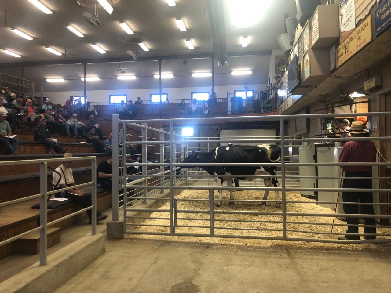 dairy farm closes 3
