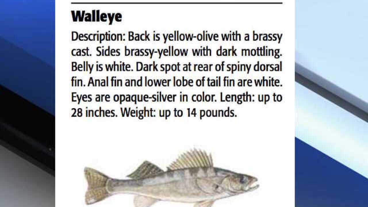 Advisory issued for walleye fish from Lyman Lake