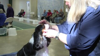 Helena Kennel Club hosts annual dog show