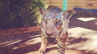 Tiger statue stolen from Trail Dust Town in Tucson