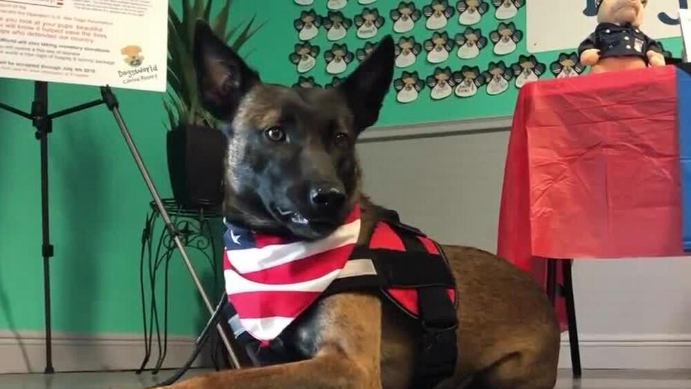 wptv-dogsworld-donation2.jpg